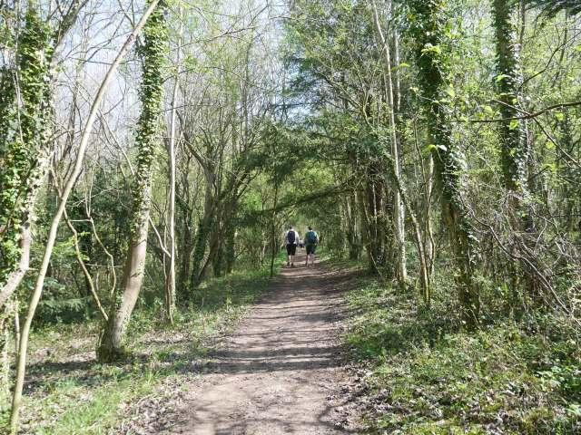 Lovely wooded walk