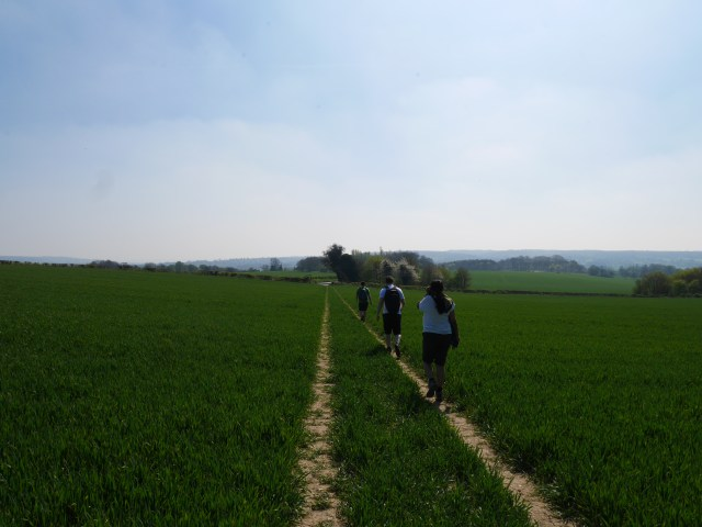 Pilgrims way through fields