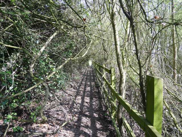 The squished-hedge path