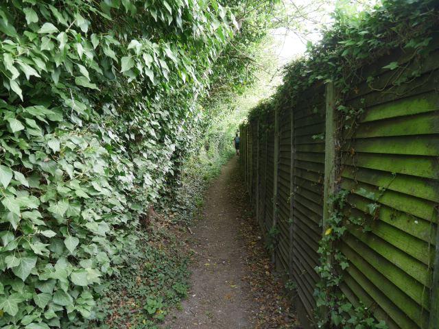 he North Downs Way - between hedges!