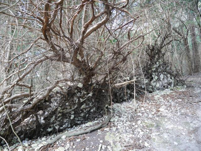 Look at the amazing tree roots!