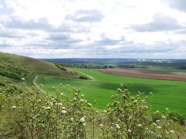 The Downs close to Detling
