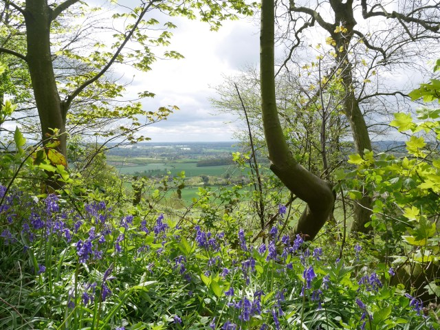 Looking out from Civiley Wood