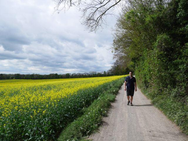 The rapefields between Hollingborne and Lenham
