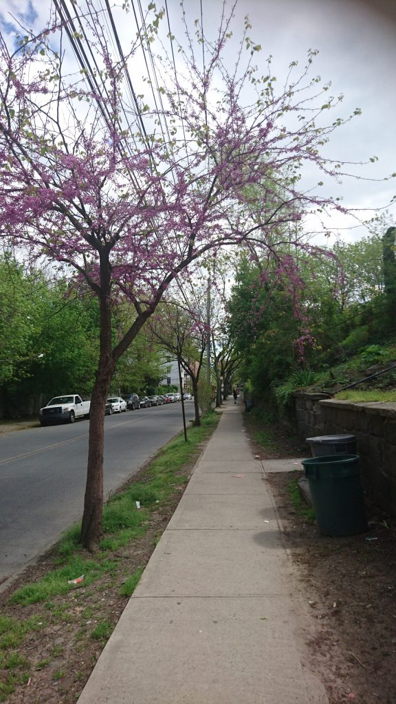 Staten Island blossoms