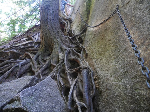 Cool tree roots