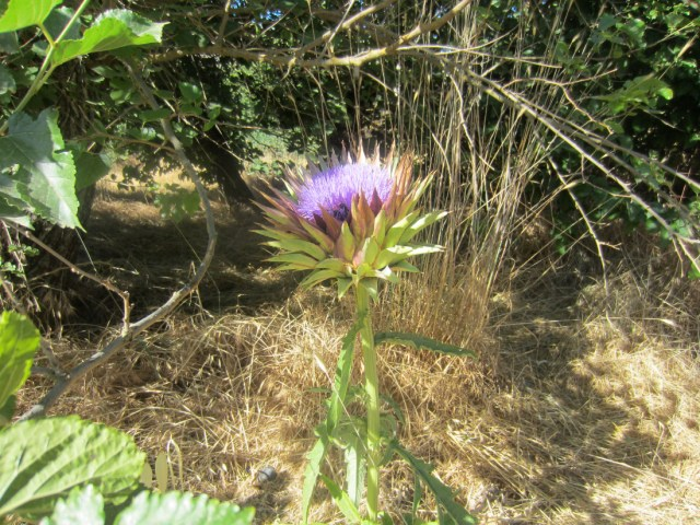 giant thistle-like flower