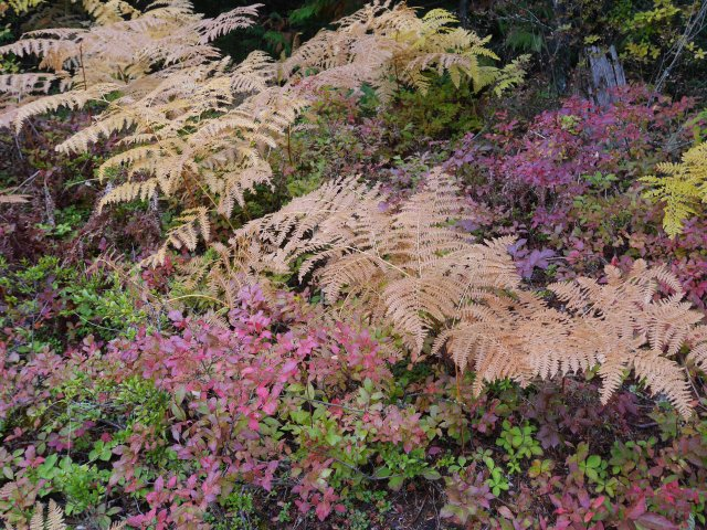 subdued autumn colours