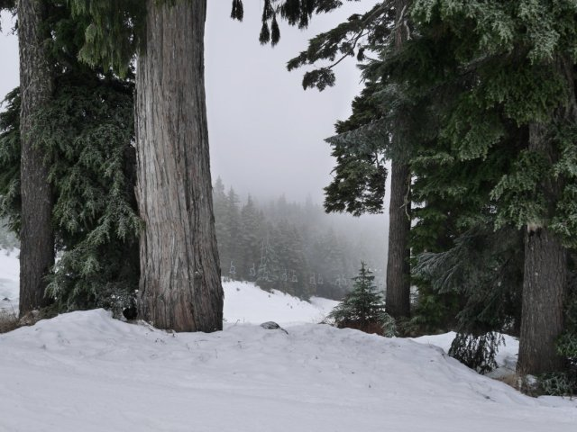 Foggy Mount Seymour