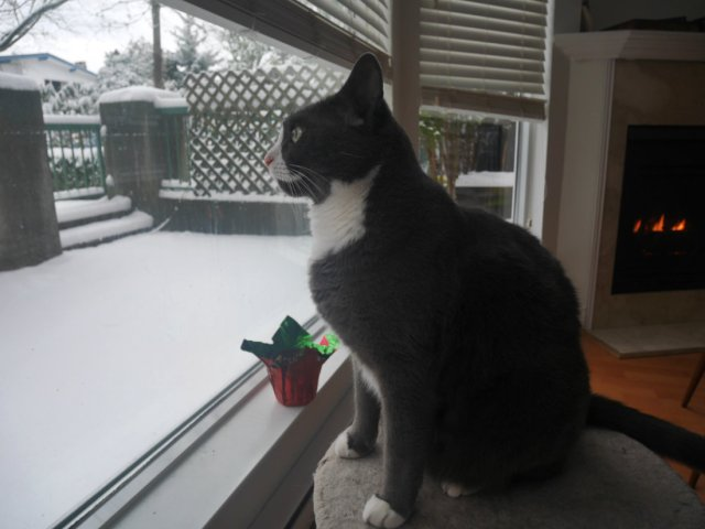 Monty watching the snow