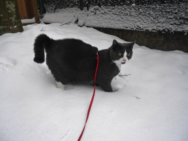 Monty in the snow