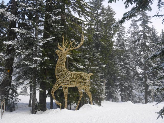 Sparkly deer in the snow