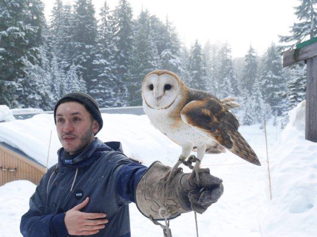 Hello pretty barn owl!