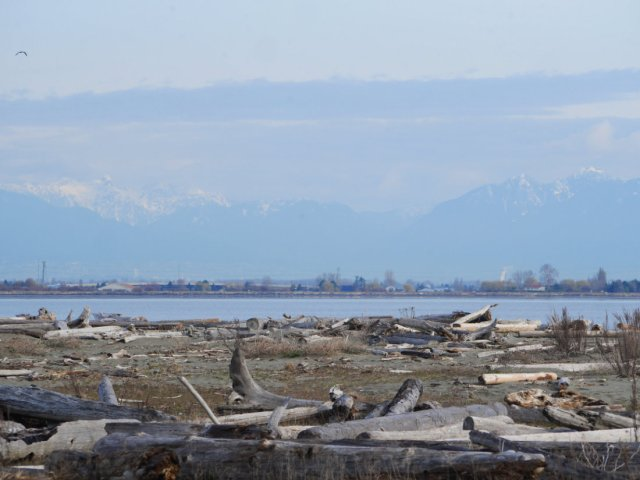 Log Views of Boundary Bay Regional Park