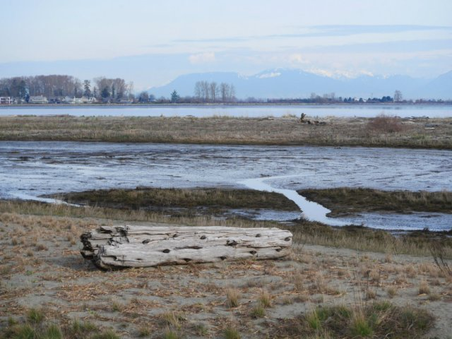 Views of Boundary Bay Regional Park