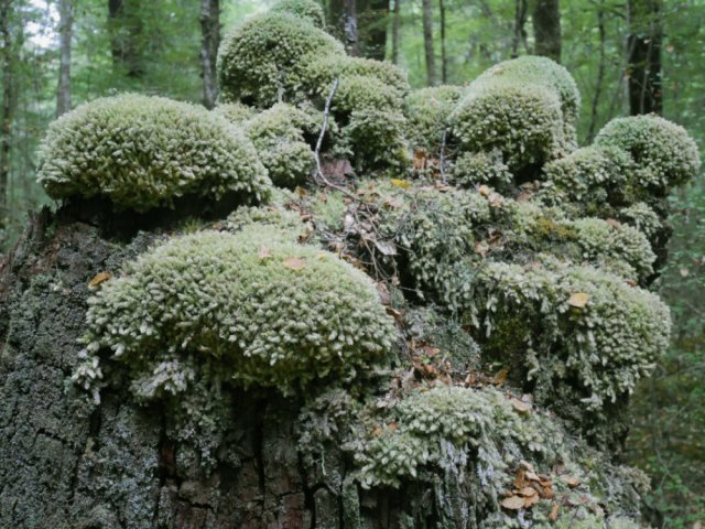 Interesting mosses