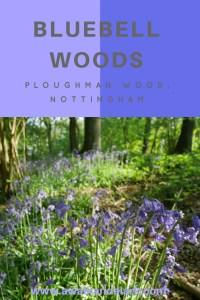 Bluebell woods Ploughman wood Nottingham