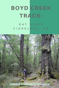 Boyd Creek Track - Fiordland Day hikes