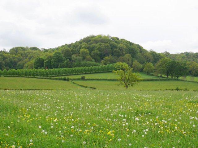 Uley views