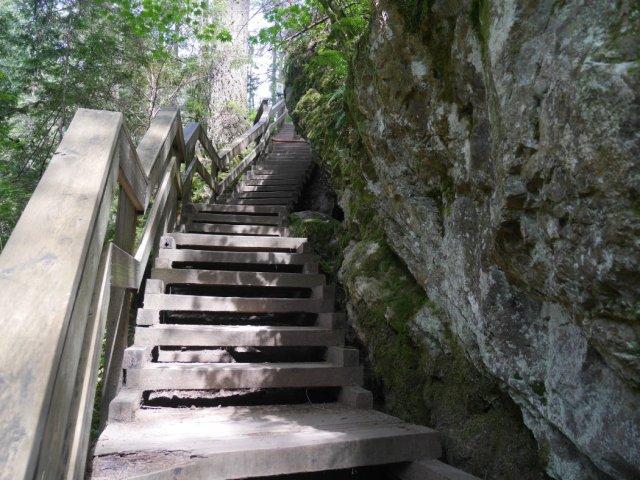 Steps back to Lynn Canyon Suspension Bridge