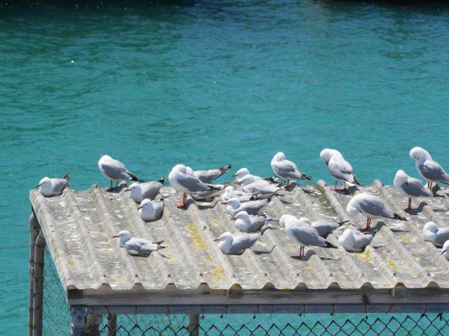 Seagulls chilling