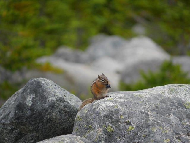 Chipmunk cutie