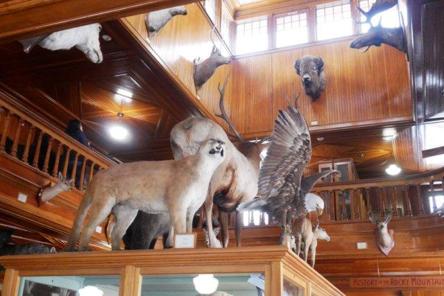 Banff Park Museum inside