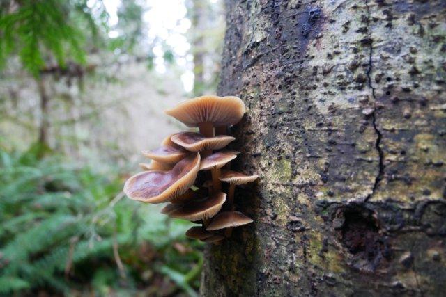 mushrooms on Mount Daniel trail