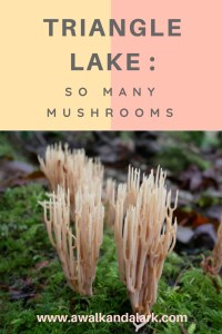 Triangle Lake trail full of mushrooms