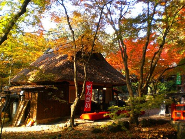 On the path to Kasuga taisha