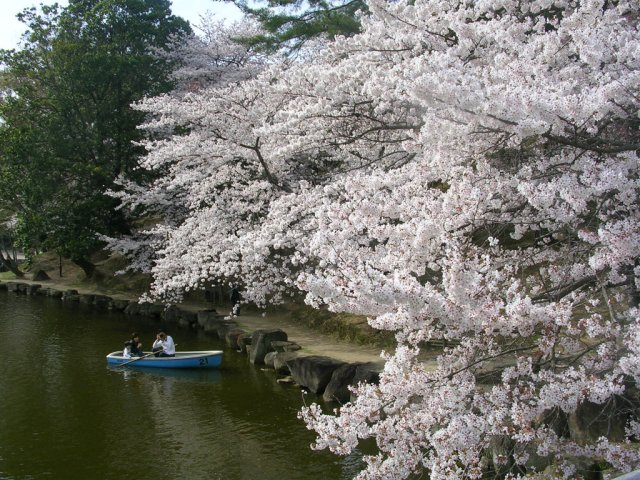 Rowing on Araike pond