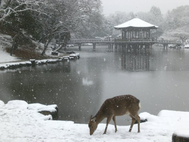 Araike pond in the snow and a deer