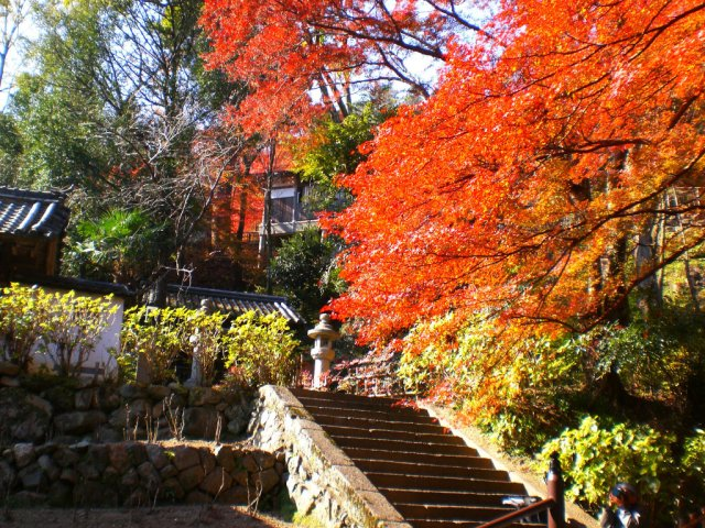 Momiji from the steps of Hasedera