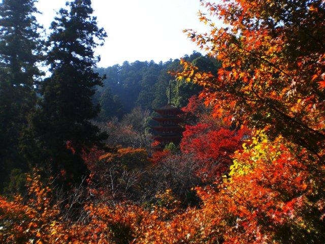Gorgeous pagoda view