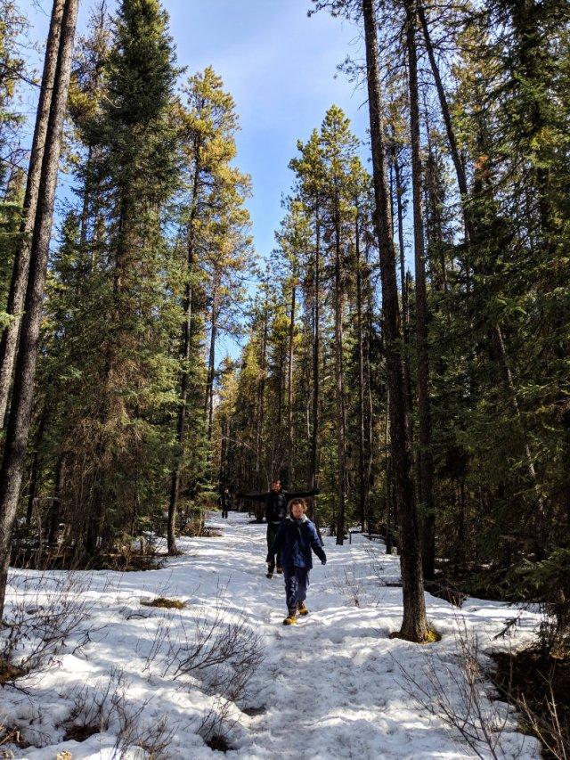 Hike through the trees