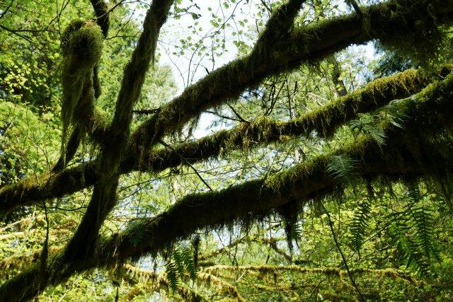 Golden Ears mosses