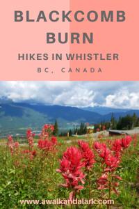 Blackcomb Burn - Fun workout hike in Whistler, Canada