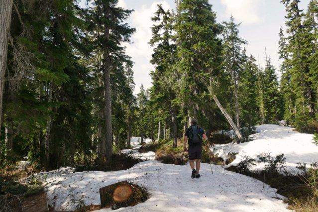 Quite snowy path