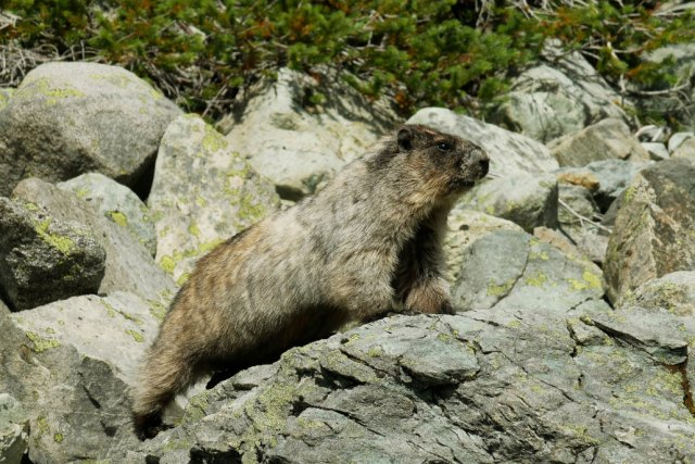 Loved meeting this marmot