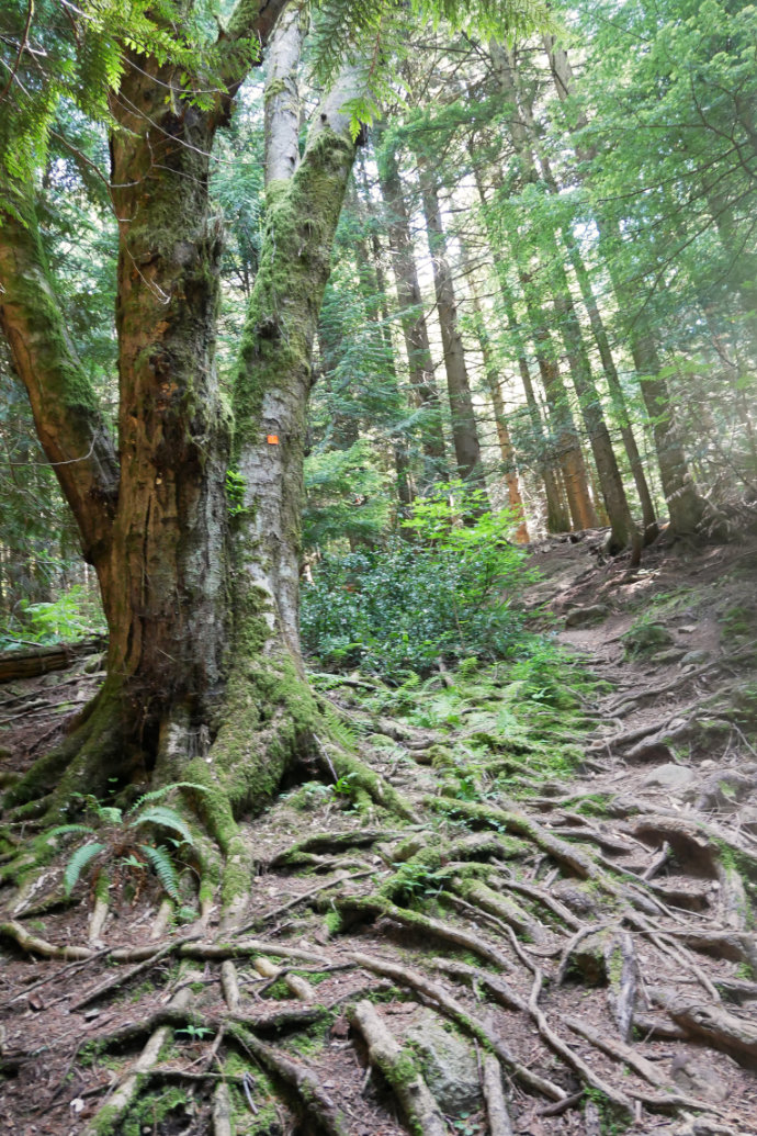 Mount Fromme - Hikes Near Vancouver - A walk and a lark
