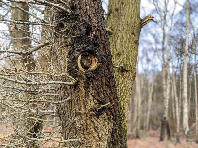 Faces in Sansom Wood