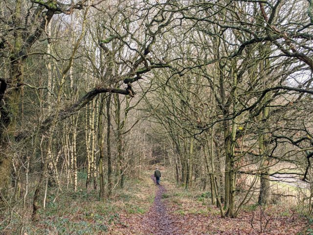 Trees in Sansom Wood