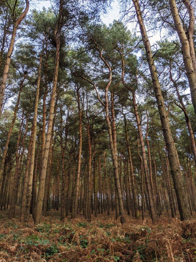 Near the edge of Sansom Wood