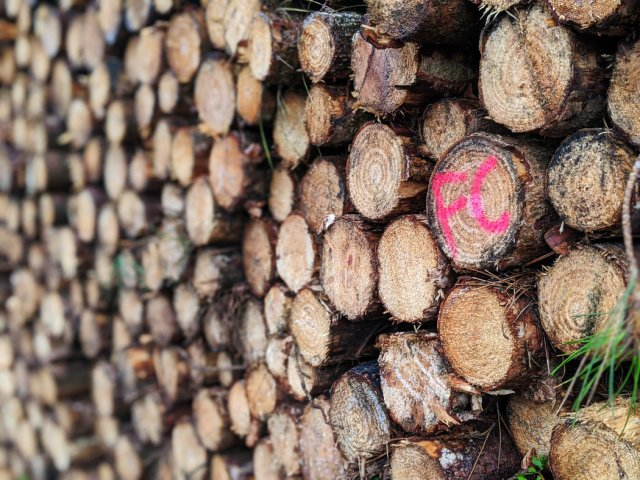 Watchwood plantation logs