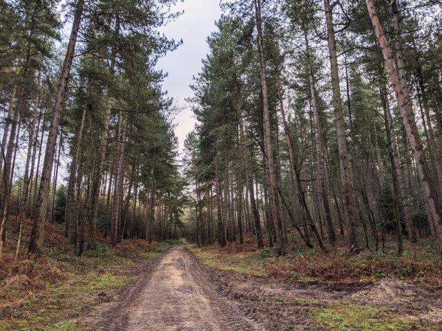 Watchwood plantation