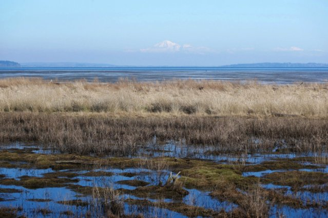 Boundary Bay Dyke Trail - view of wetlands and Mount Baker