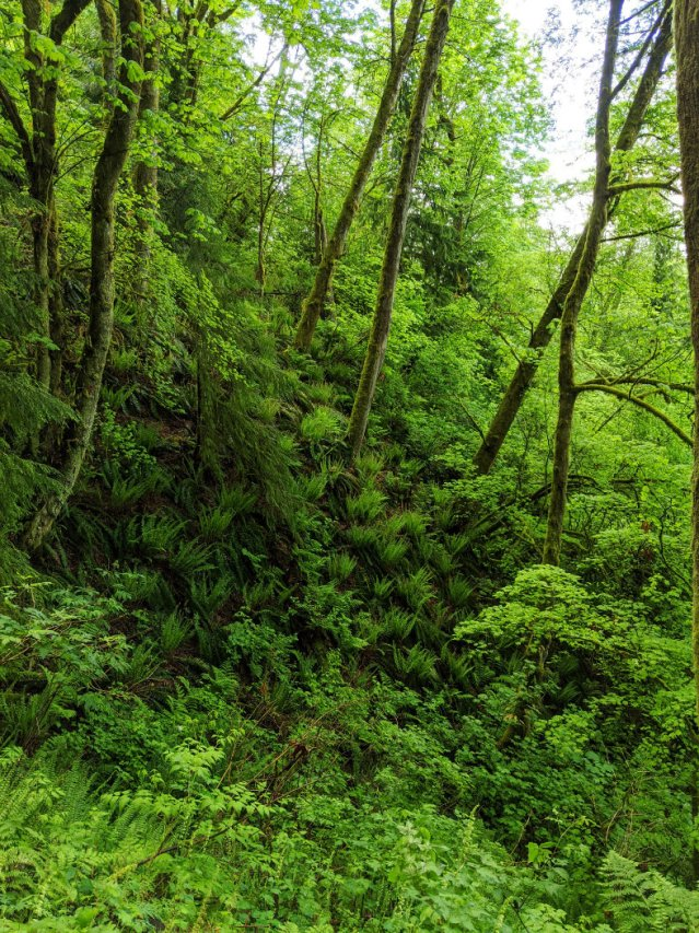Love all the ferns and the steep mountain slopes