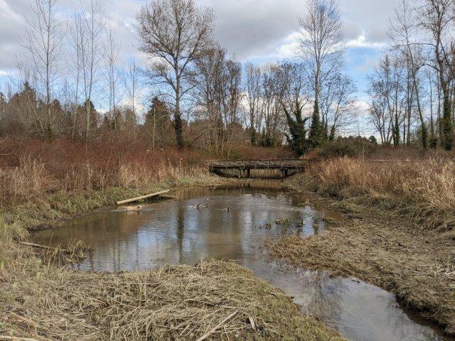 Fraser River Park - Marshy area