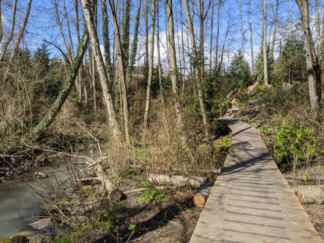 Boardwalk in Renfrew Ravine Park