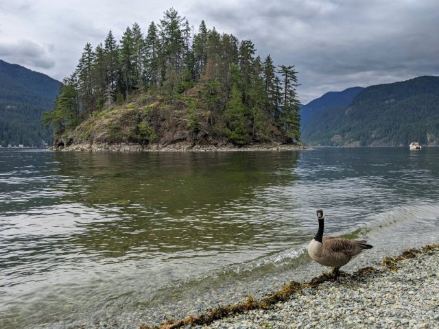 Posing goose on Jug Island Beach